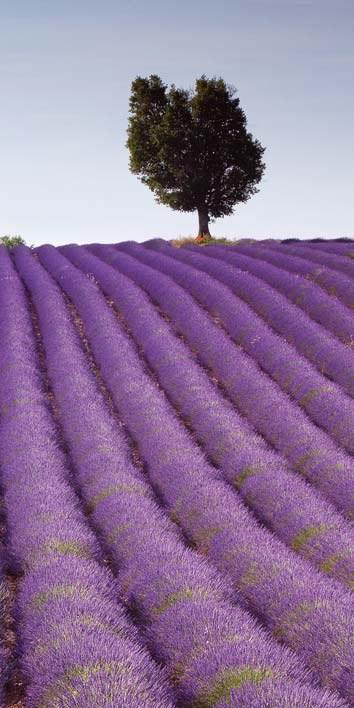 Samoljepljiva foto tapeta za vrata DL010 Lavender, 95x210 cm - Foto tapete