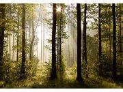 Flis foto tapeta AG Šuma FTNS-2447 | 360x270 cm Foto tapete
