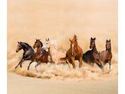 Foto zavjesa Stado konja FCPXXL-7422, 280 x 245 cm Foto zavjese