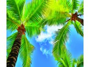 Foto zavjesa Palme FCSXL-4802, 180 x 160 cm Foto zavjese