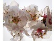 Foto zavjesa Cvijeće FCSXL-4809, 180 x 160 cm Foto zavjese