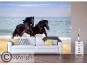 Foto tapeta AG Konji na plaži FTS-1336 Foto tapete