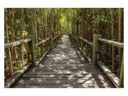 Flis foto tapeta Mangrovska šuma MS50059 | 375x250 cm Foto tapete