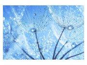 Flis foto tapeta Kapljice vode na maslačku MS50125 | 375x250 cm Foto tapete