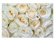 Flis foto tapeta Bijele ruže MS50137 | 375x250 cm Foto tapete
