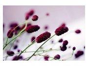 Flis foto tapeta Ljubičasti cvijet MS50141 | 375x250 cm Foto tapete