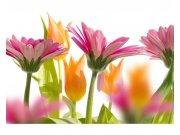 Flis foto tapeta Proljetni cvijet MS50142 | 375x250 cm Foto tapete