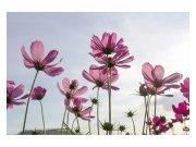 Flis foto tapeta Cvijeće MS50145 | 375x250 cm Foto tapete