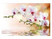 Flis foto tapeta Bijela orhideja MS50147 | 375x250 cm Foto tapete