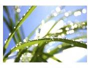 Flis foto tapeta Rosa na travi MS50154 | 375x250 cm Foto tapete