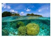 Flis foto tapeta Koraljni greben MS50200 | 375x250 cm Foto tapete