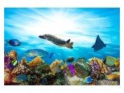 Flis foto tapeta Ribe u oceanu MS50216 | 375x250 cm Foto tapete