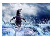 Flis foto tapeta Pingvin MS50219 | 375x250 cm Foto tapete
