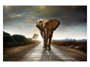 Flis foto tapeta Hodajući slon MS50225 | 375x250 cm Foto tapete
