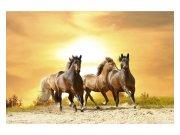 Flis foto tapeta Konji na zalasku sunca MS50227 | 375x250 cm Foto tapete