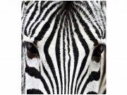 Flis foto tapeta Zebra MS30234 | 225x250 cm Foto tapete