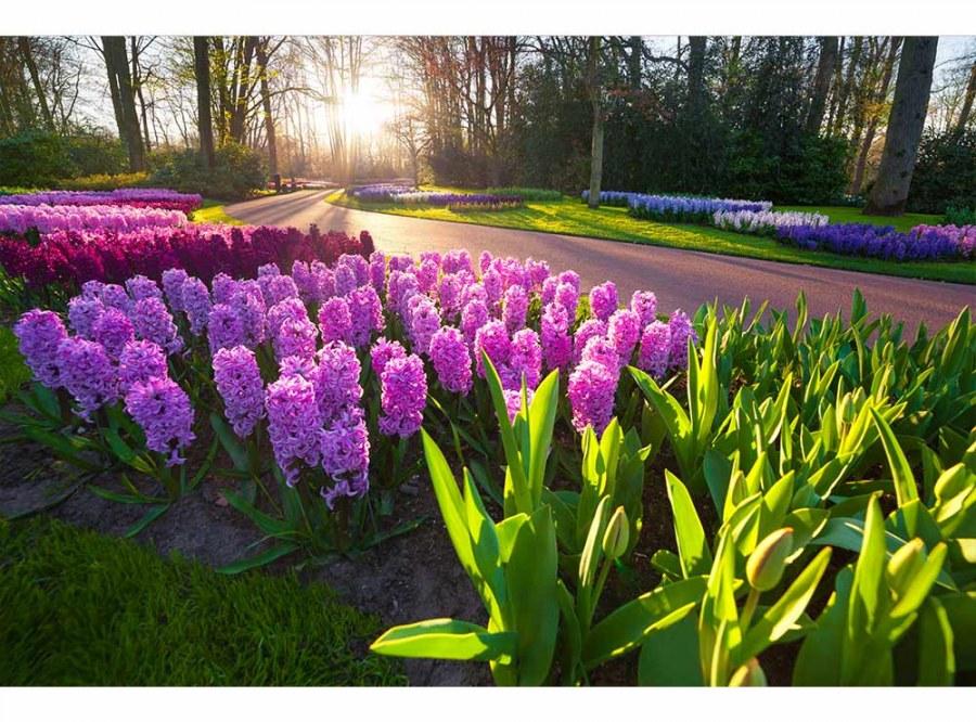 Flis foto tapeta Cvijet zumbula MS50068 | 375x250 cm - Foto tapete