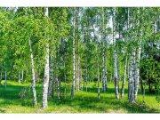 Flis foto tapeta Brezov lug MS50100 | 375x250 cm Foto tapete