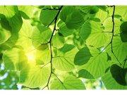 Flis foto tapeta Zeleno lišće MS50107   375x250 cm Foto tapete