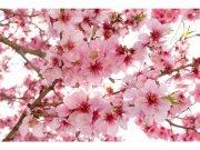 Flis foto tapeta Cvijet jabuke  MS-5-0108   375x250 cm Foto tapete