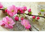 Flis foto tapeta Sakura MS50109 | 375x250 cm Foto tapete