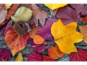 Flis foto tapeta Jesenjsko lišće MS50112 | 375x250 cm Foto tapete