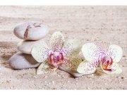 Flis foto tapeta Zen MS50118 | 375x250 cm Foto tapete