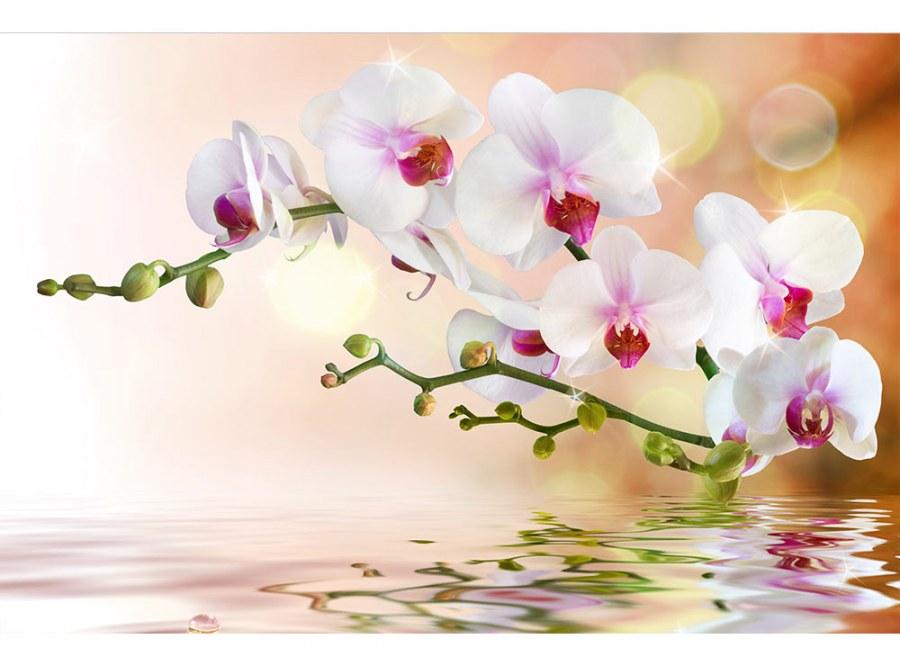 Flis foto tapeta Bijela orhideja MS50147   375x250 cm - Foto tapete