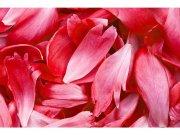 Flis foto tapeta Crvene latice MS50151 | 375x250 cm Foto tapete
