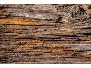 Flis foto tapeta Kora stabla MS50159 | 375x250 cm Foto tapete