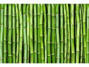 Flis foto tapeta Bambus MS50165 | 375x250 cm Foto tapete