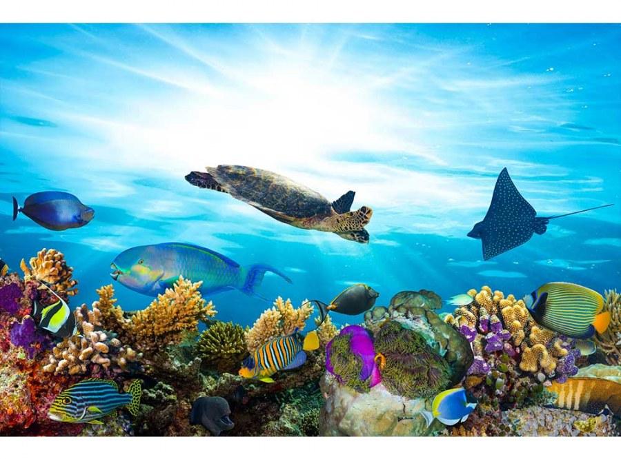 Flis foto tapeta Ribe u oceanu MS50216 | 375x250 cm - Foto tapete
