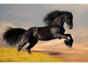 Flis foto tapeta Crni konj MS50228 | 375x250 cm Foto tapete