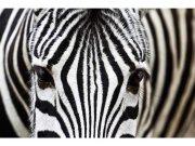 Flis foto tapeta Zebra MS50234 | 375x250 cm Foto tapete