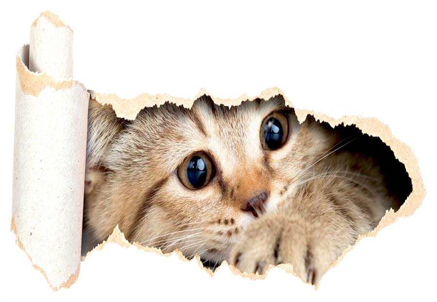 Samoljepljiva dekoracija Mačka na prozoru SM-3442, dimenzije 42,5 x 65 cm - Naljepnice za zid