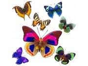 Samoljepljiva dekoracija Šareni leptiri SS-3854, 30x30 cm Naljepnice za zid