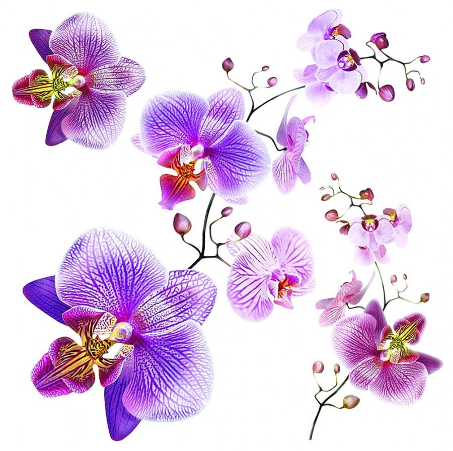 Samoljepljiva dekoracija Orhideja SS-3859, 30x30 cm - Naljepnice za zid