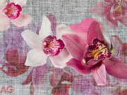 Foto tapeta AG Orhideja FTXXL-1438 | 360x255 cm Foto tapete