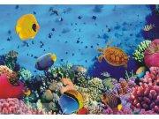Flis foto tapeta AG Morski svijet FTNXXL-0375 | 360x270 cm Foto tapete