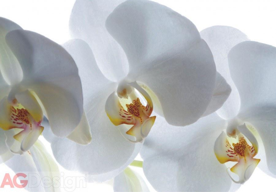 Flis foto tapeta AG Bijela Orhideja FTNXXL-0466 | 360x270 cm - Foto tapete