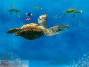 Foto tapeta AG Nemo i velika Kornjača FTDXXL-2228 | 360x255 cm Foto tapete