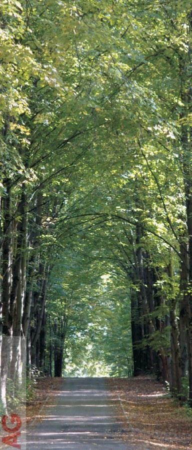 Flis foto tapeta AG Park lane FTNV-2807 | 90x202 cm - Foto tapete