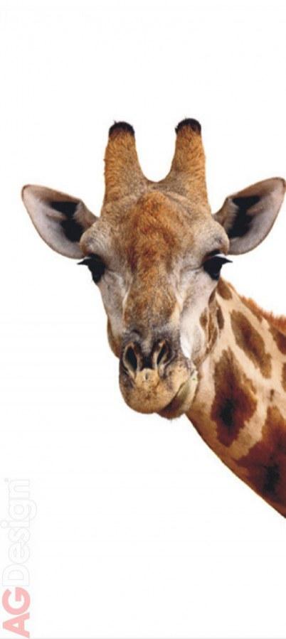 Flis foto tapeta AG Pogled Žirafe FTNV-2851 | 90x202 cm - Foto tapete