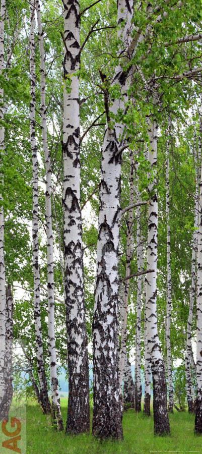 Flis foto tapeta AG Breze FTNV-2896 | 90x202 cm - Foto tapete