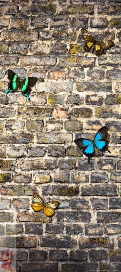 Flis foto tapeta AG Bvtterfly on the Wall FTNV-2905 | 90x202 cm - Foto tapete