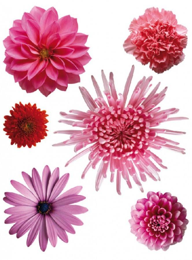 Naljepnica za zid Ljvbičasti cvijetovi F-0406, 85x65 cm - Naljepnice za zid