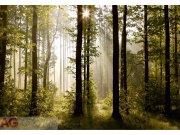 Foto tapeta AG Šuma FTS-0181 | 360x254 cm Foto tapete