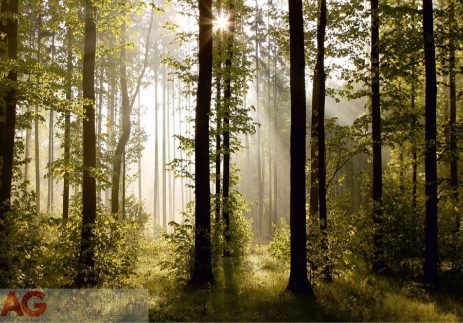 Foto tapeta AG Šuma FTS-0181 | 360x254 cm